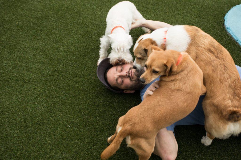 Encuentre cuidado confiable para mascotas